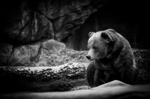teddy bear-8399