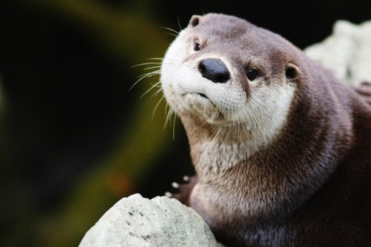 you otter see this-8271