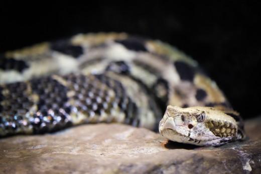 zoo blog-7915