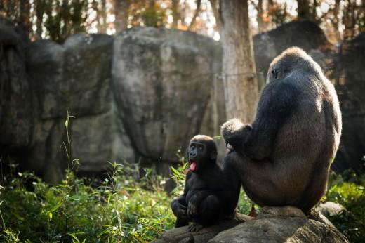 zoo blog-8040
