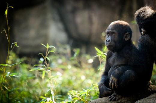 zoo blog-8043