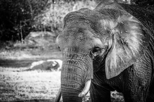 zoo blog-8094