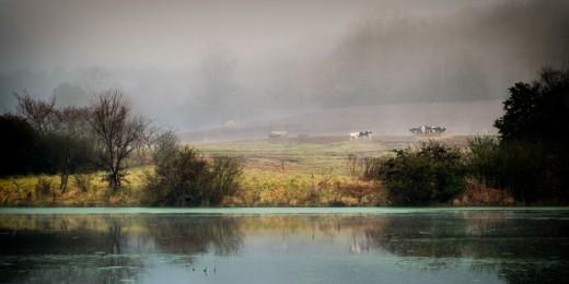 Mist pastures