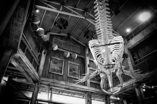 Wright Whale, Georgia Aquarium