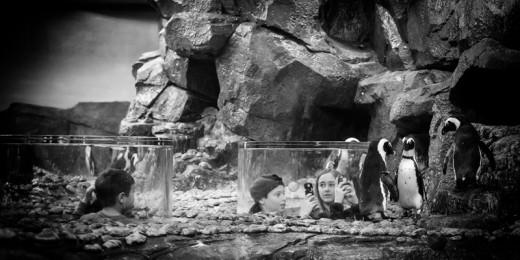 Communing with Penguins, Georgia Aquarium