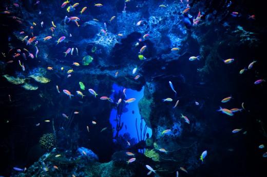 Tropical fish, Georgia Aquarium