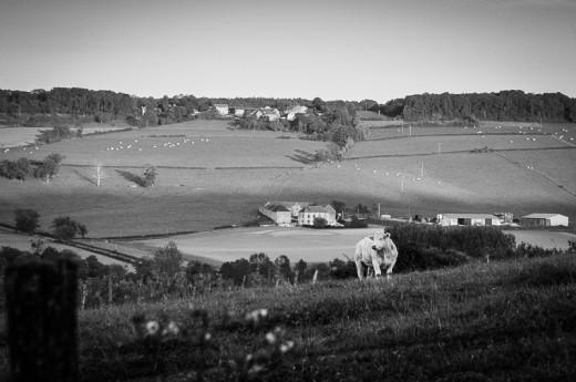 La Vache, Bourgogne