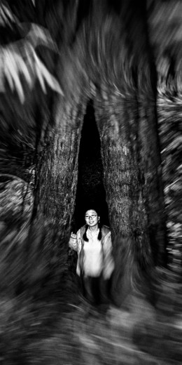 trees-002568