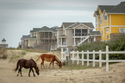 Wild Horses, Corolla, Outer Banks